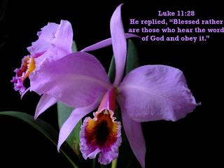 Obey God!
