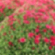 valley growers garden center.jpg