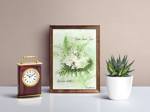 Queen Anne's Lace Wildflower Print - Reproduced Print of Original Art ($8-$18)