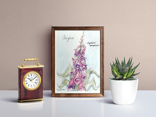 Foxglove Print - Reproduced Print of Original Art ($8-$18)