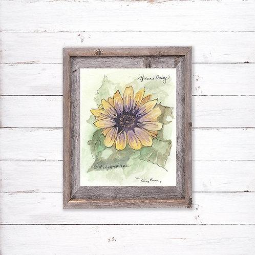 African Daisy Flower Print - Reproduced Print of Original Art ($8-$18)