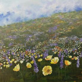 Hillside Poppy Field