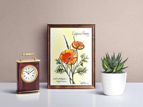 California Poppy Print - Reproduced Print of Original Art ($8-$18)