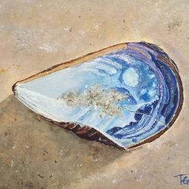 Carolina Mussel Shell