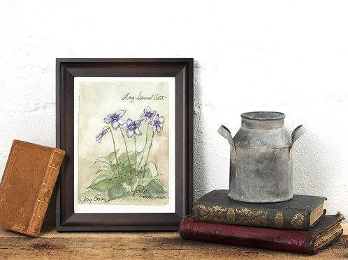 Long Spurred Violet Flower Print - Reproduced Print of Original Art ($8-$18)