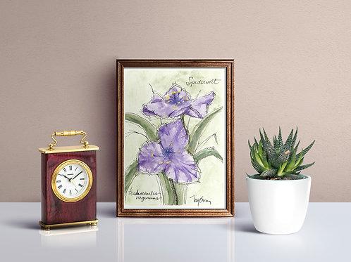 Spiderwort Wildflower Print - Reproduced Print of Original Art ($8-$18)