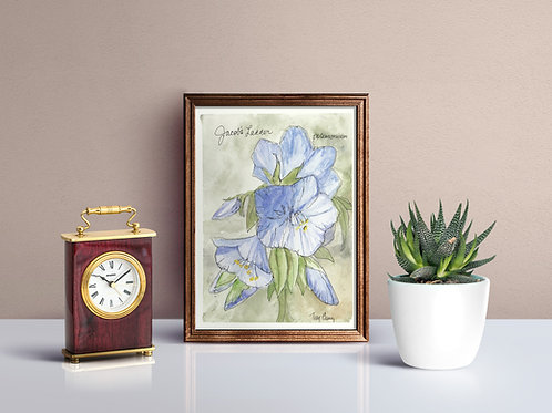 Jacob's Ladder Wildflower Print - Reproduced Print of Original Art ($8-$18)