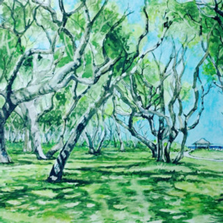 Fort Fisher Trees