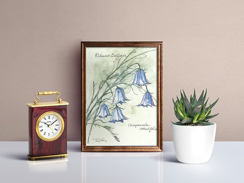 Bluebell Bellflower Print - Reproduced Print of Original Art ($8-$18)