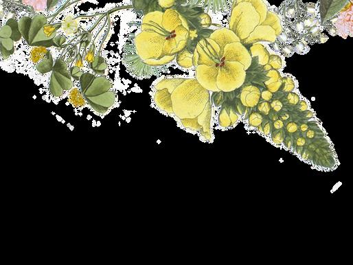 Jojoba oil – all skin types