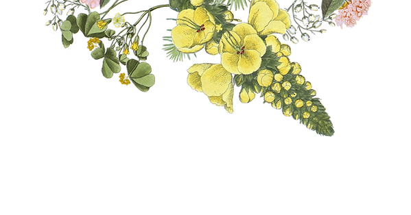 illustrert Blomster