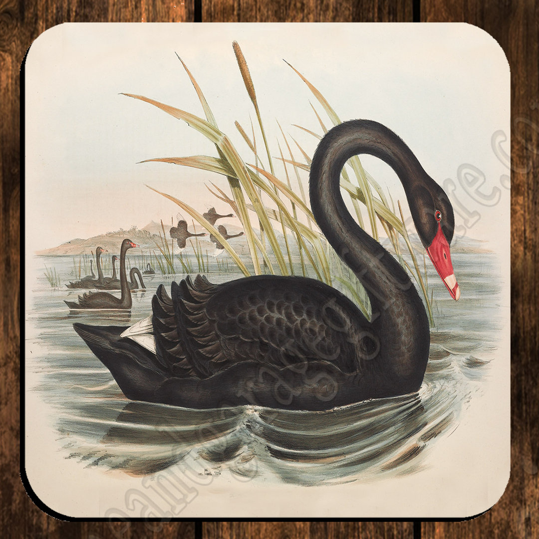 coaster single black swan