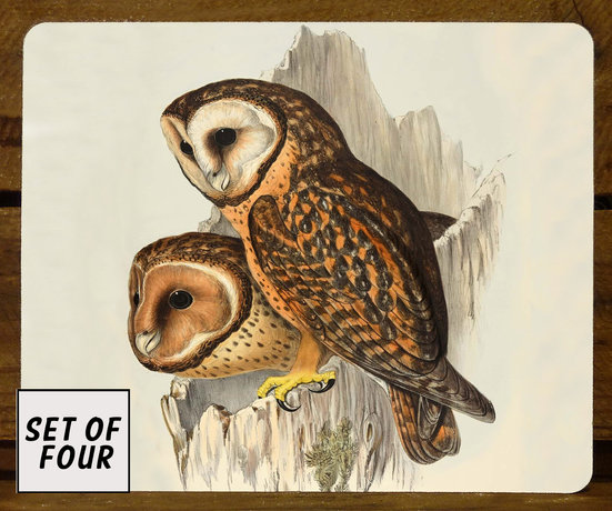 John Gould Tasmanian masked owl