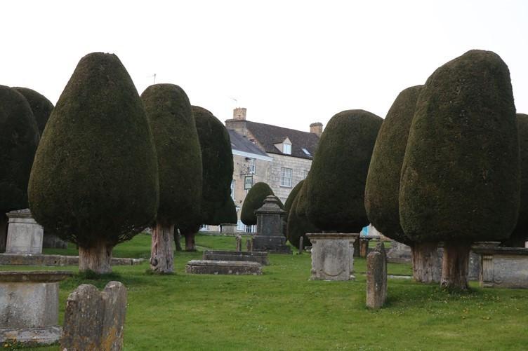 The Painswick Yew Trees