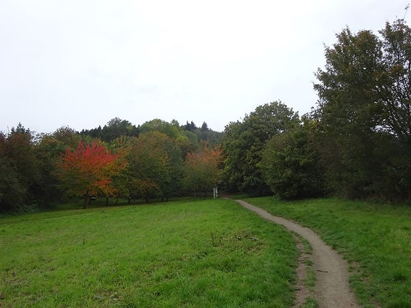 Credenhill Park Wood