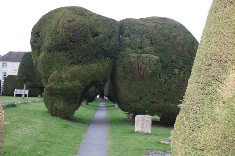 Follow the path under the Yew Trees