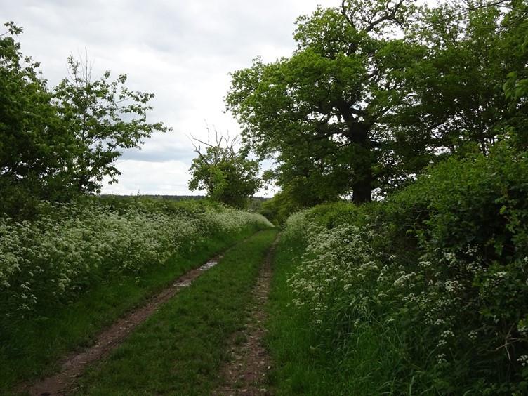 The Shropshire Way at Ebury Hill