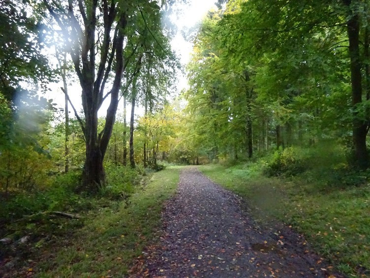 One of the many woodland paths