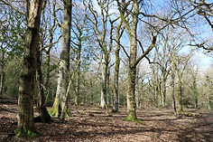Nagshead Nature Reserve in the Forest of Dean