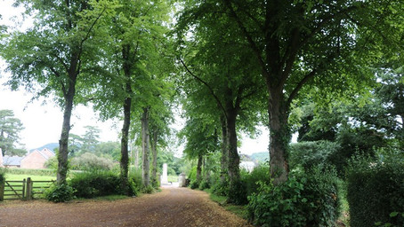 VISIT | When Trees Become People at Walford | Herefordshire