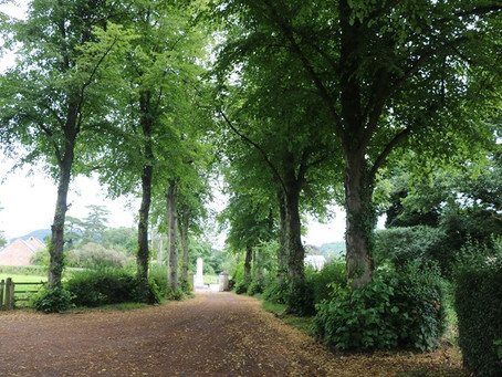 VISIT   When Trees Become People at Walford   Herefordshire