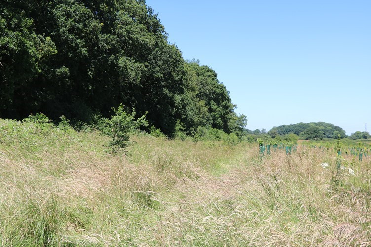 Open Grassland at Ravensroost