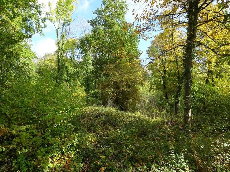 Amidst green arboreal splendour and bird song