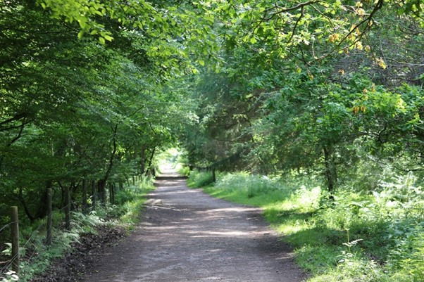 Tree-lined cycleways of the Forest of Dean