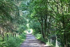 Forest of Dean Family Cycle Trail