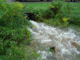 stream sidney ny