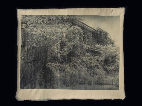 ツタに覆われたアパート / Ivy-covered apartment