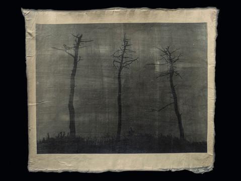 並ン松 / Forest of pines