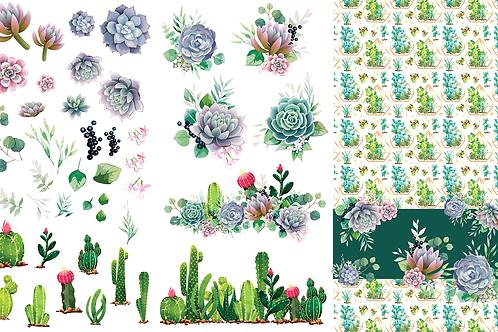 Cacti and Succulents Transfer