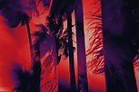 02_Palms_Background_Red_Purple_Dark_edit