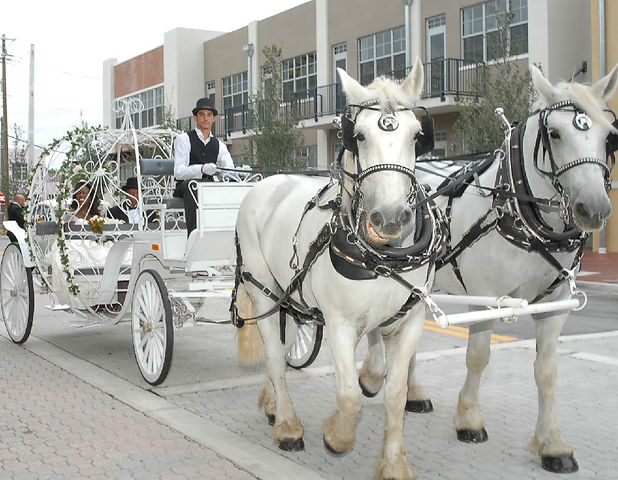 wedding, couple, venue, photography, catering, event planner, bridal bouquet, Rieken Weddings 9548227273, horse drawn carriage, themed events