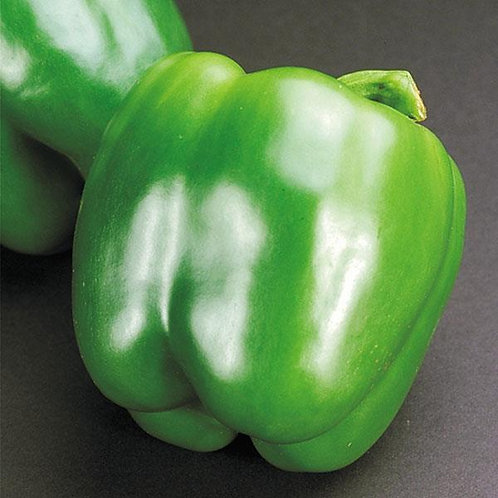 Peppers-Full Flat