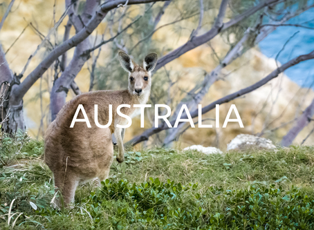 Australia is currently experiencing one of the largest natural disasters.  Here's How to Help!