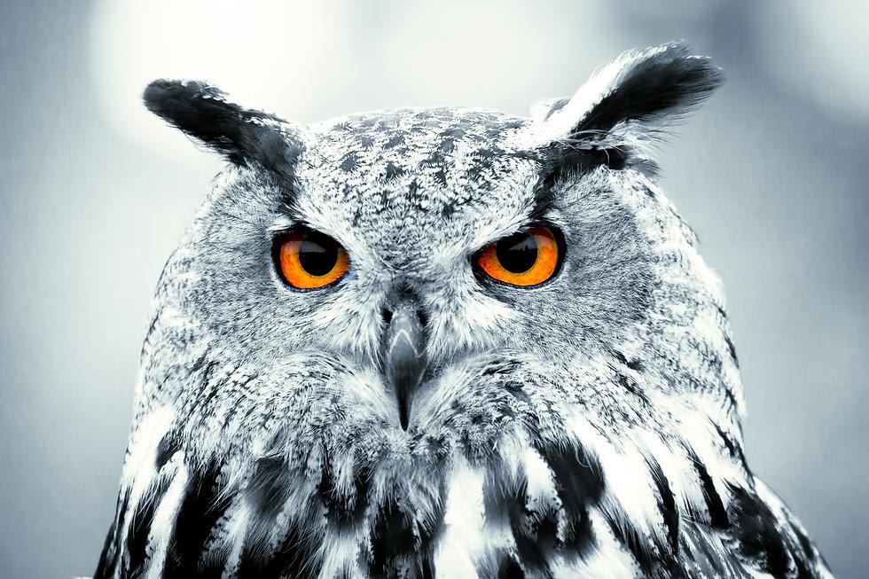 Piercing owl Eyes.jpg