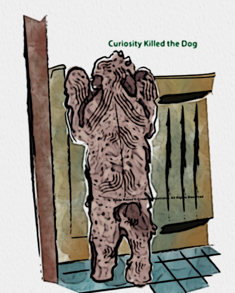 Curiosity killed the dog