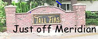 TALL FIRS.png