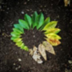 leaf-3341897_960_720.jpg
