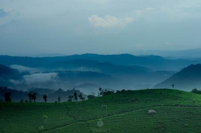 Landscape @ Munnar