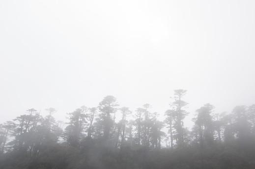 Early morning mist inside dense forest