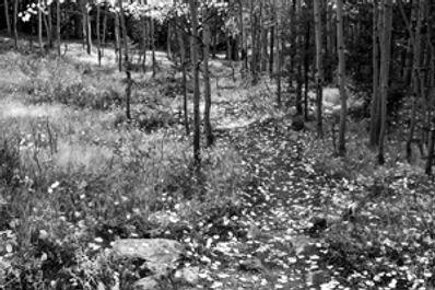 BoulderLakeTrail_B-W.jpg