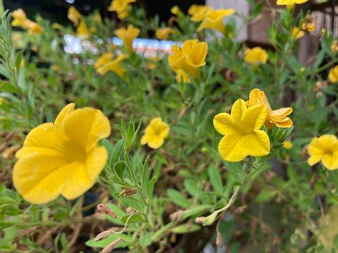 bloemen in Mantgum.jpg