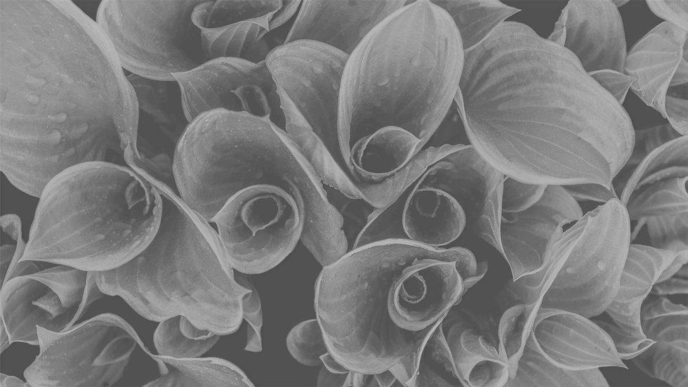 Dew on rolled-up leaves_edited_edited_edited_edited_edited.jpg