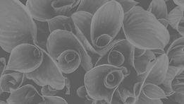 Dew on rolled-up leaves_edited_edited_edited_edited.jpg