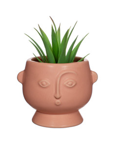 Pink Face Planter 3.jpg