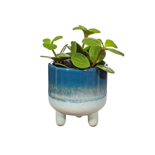 Blue Mojave Planter | Sass&Belle