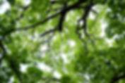 john-reed-wmwqiTTi9zA-unsplash_edited.jp